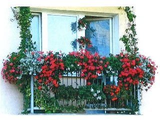 Konkurs na najładniejszy balkon, ogródek przydomowy i najładniej zagospodarowane otoczenie budynku